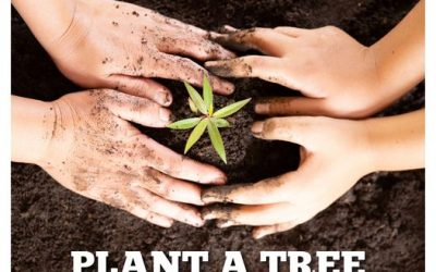 Wzo Plant A Tree